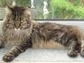 Løve Hulen's Cat Walk