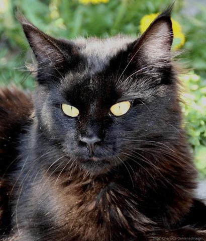 Blackie 1 år