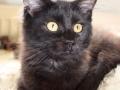 Blackie 5 måneder