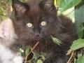 Blackie 3 måneder