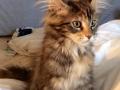 Olivia 3,5 måneder