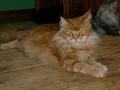 Leopold 2 år