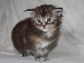 Octavia 4 uger