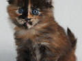 Winnie 4,5 uger